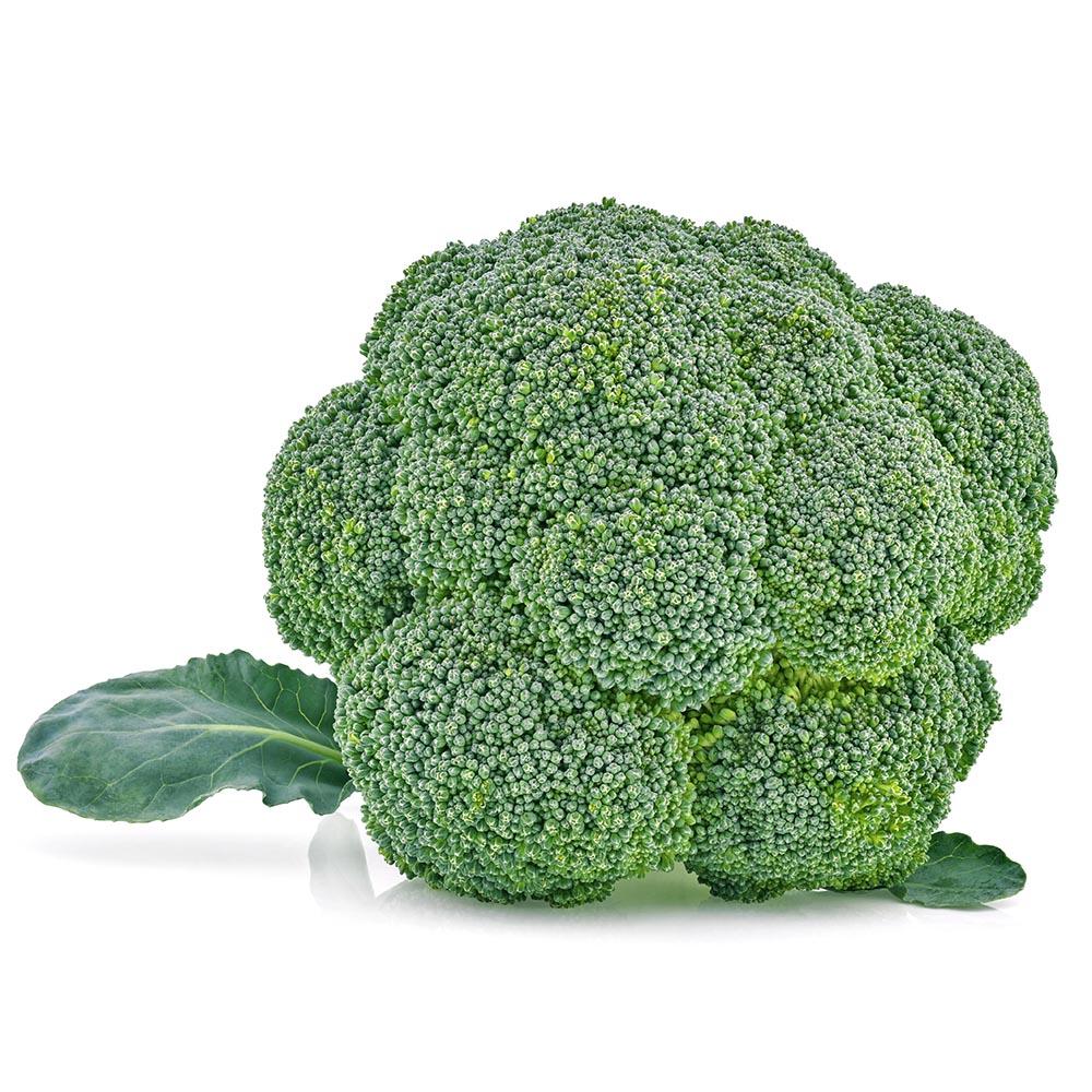 BROCOLI broccoli isolated on white background 1000p