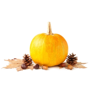 CALABAZA DECORACION ripe pumpkin and autumn leaves isolated on white background top view 1000p