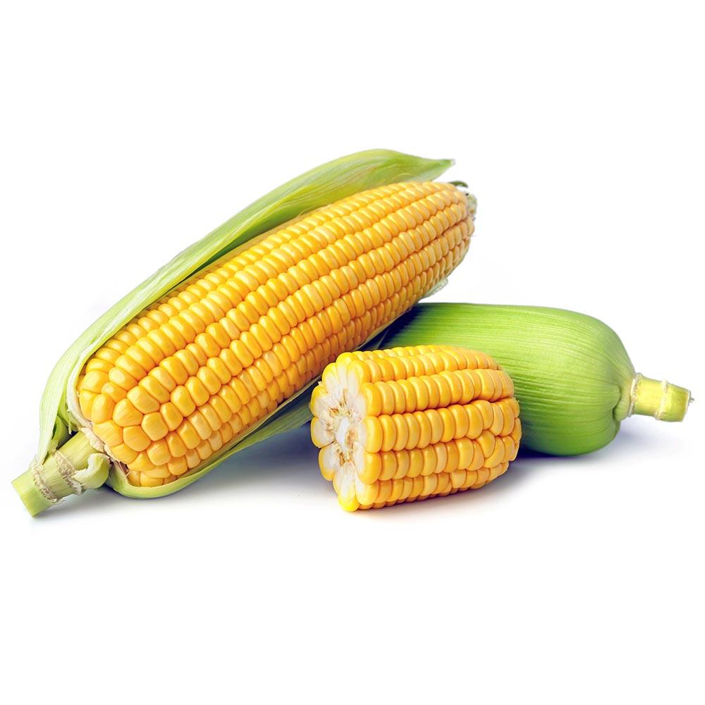 MAIZ fresh corn isolate on white background 1000p