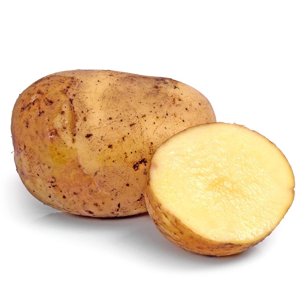 patata kennebeck
