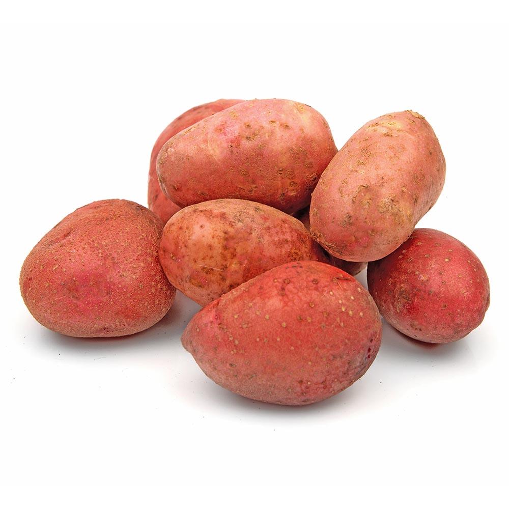 PATATA ROJA potatoes isolated on white background1 1000p