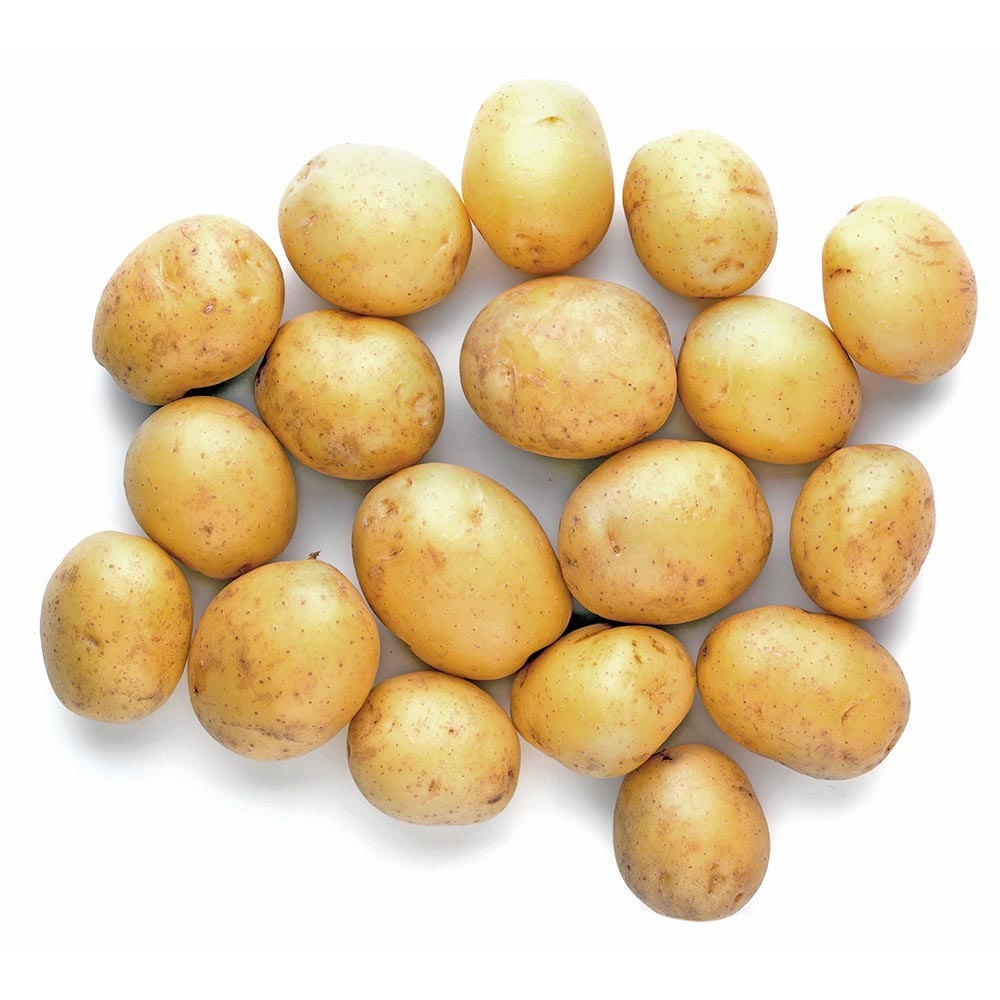 PATATAS MICRO new potato isolated on white background close up 1000p