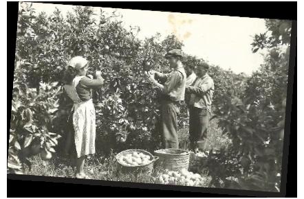 Comprar fruta domicilio en DE LA MASIA